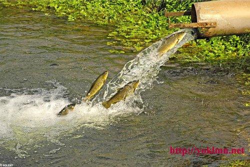 ловля форели в днепропетровской области