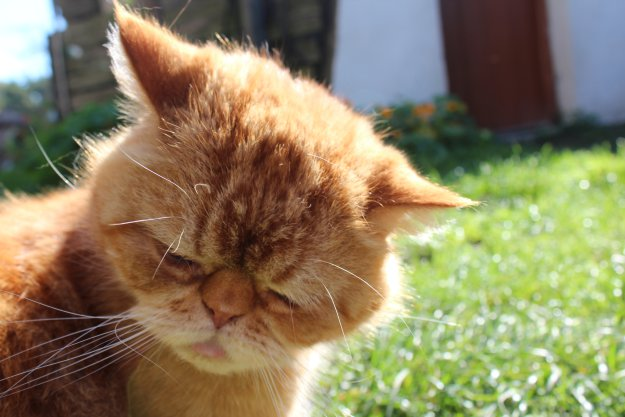 кот обиделся фото