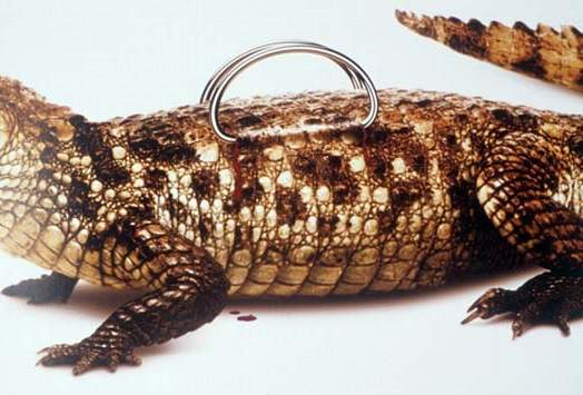 Сумки, кошельки, ремни из кожи питона, морской змеи
