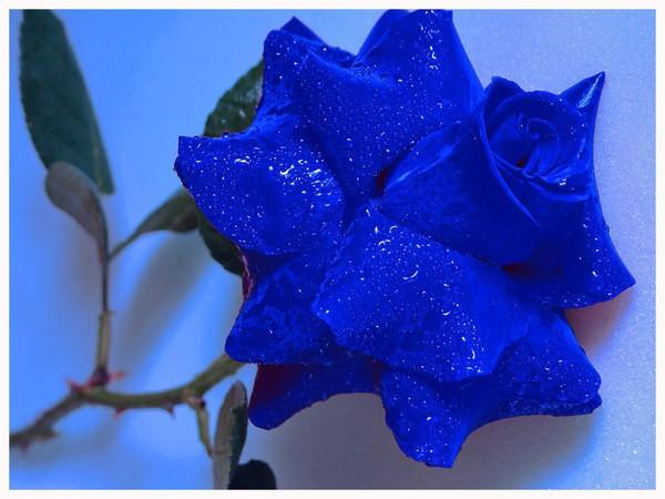 картинки сини:
