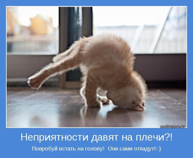 http://bm.img.com.ua/nxs/img/prikol/images/large/3/7/246473.jpg