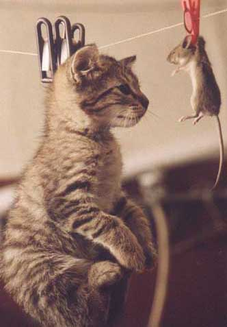 Забавные коты)