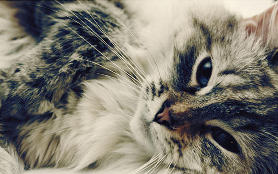 Интересности о животных (часть 2)