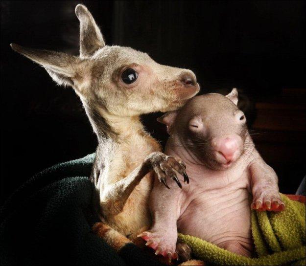 Животные теги животные друзья фото