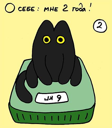 Смешные милые кошкикотикикотята котейки фото  VK