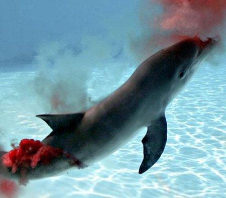 Дельфины фото хорошего качества