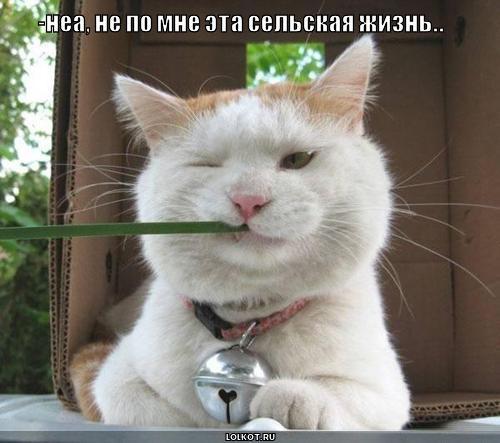 Смешные картинки котов новое