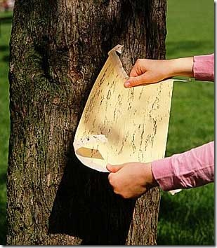 фото бумажное дерево