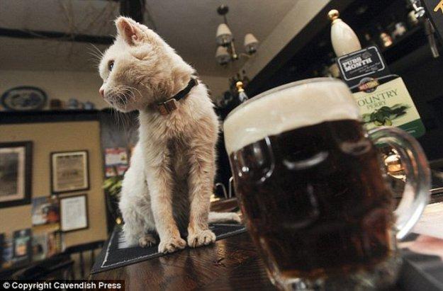 Кошка долгожительница