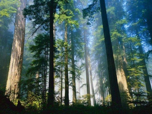 Картинки про очень очень красивую природу