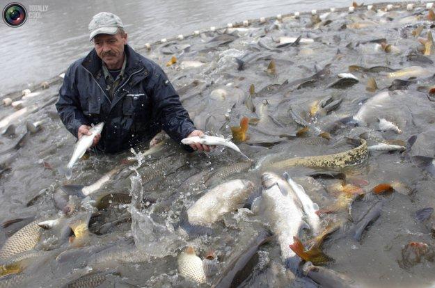 рыбалка на белую рыбу видео бесплатно