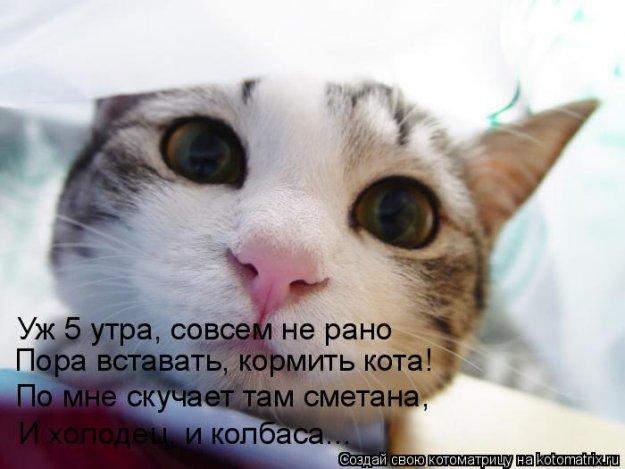 милые картинки с кошечками