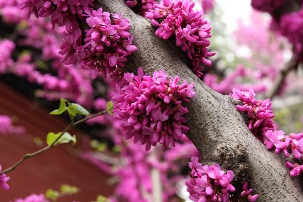 Города и страны фото цветы китай
