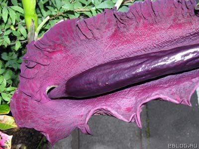 Дивні рослини