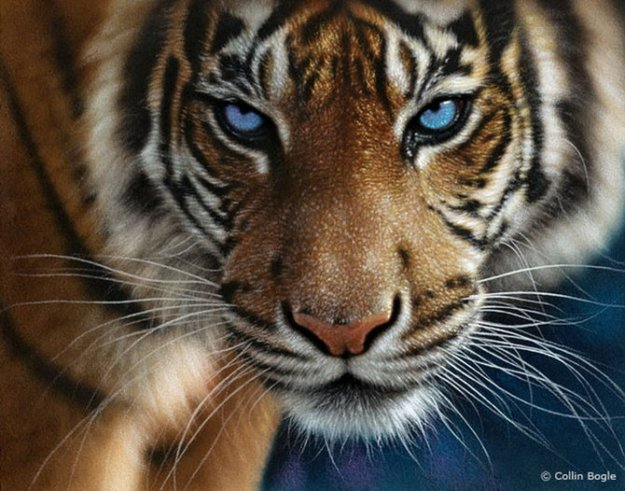 картинки с животными прикольные нарисованные: