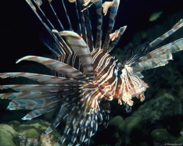 фото морских рыб