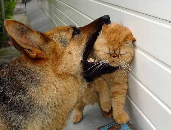 фото приколы про животных: