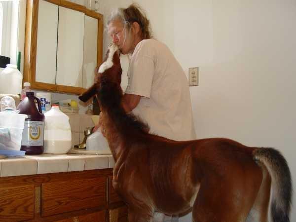 Пони в домашних условиях