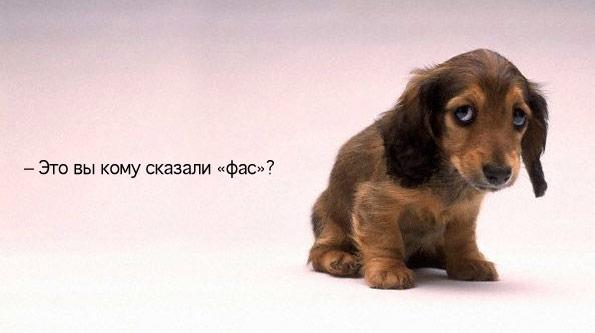 http://bm.img.com.ua/nxs/img/prikol/images/large/6/4/89246.jpg