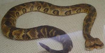 змеи мутанты фото