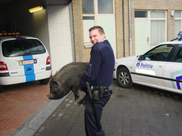 ловим полицейские рации