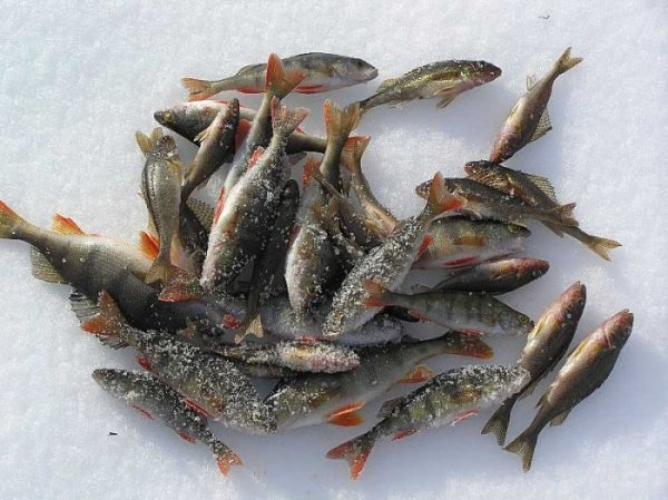 философия рыбалки на текучева
