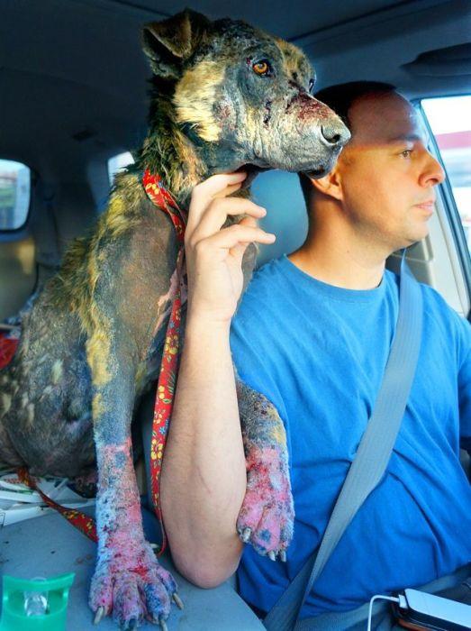 Спасение несчастной бездомной собаки