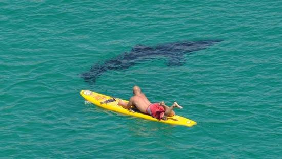 Пляж и акулы 80
