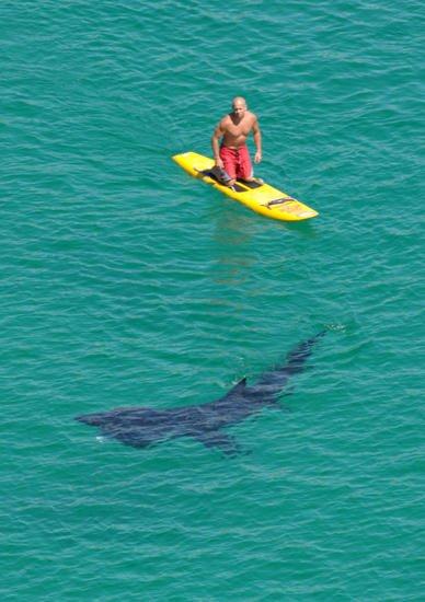 Пляж и акулы 15