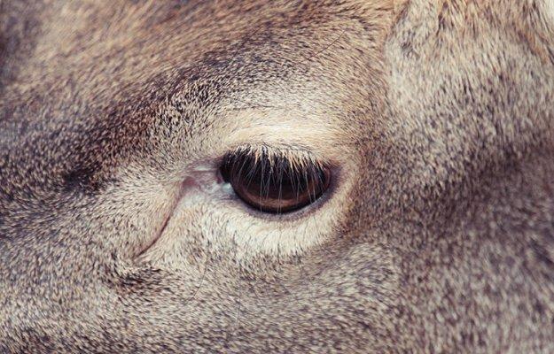 У жирафа вообще глаза в кучу от происходящего