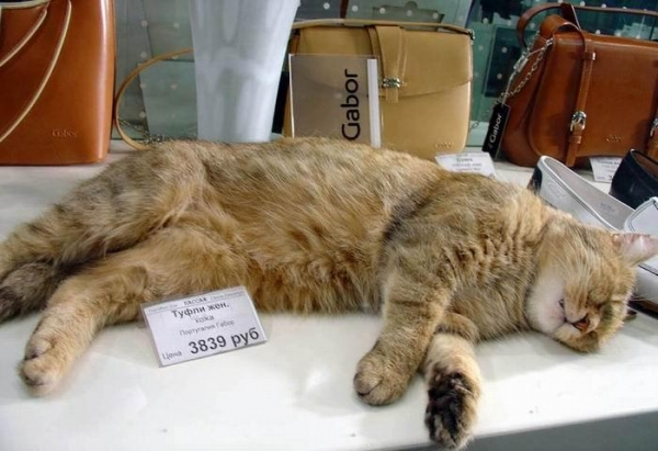спящий кот картинки