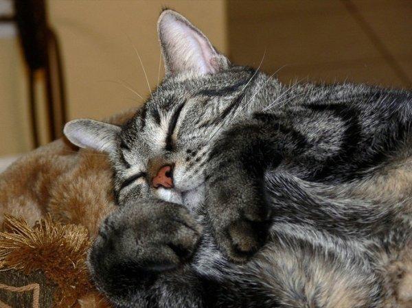спящий кот картинка