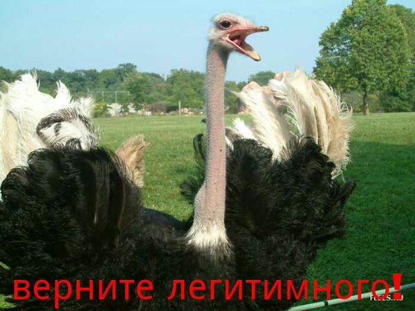 Деньги Януковича за границей остаются заблокированными, но санкции не могут длиться вечно, - Касько - Цензор.НЕТ 8693