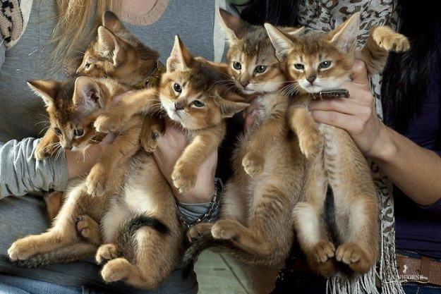 Породы кошек самые редкие