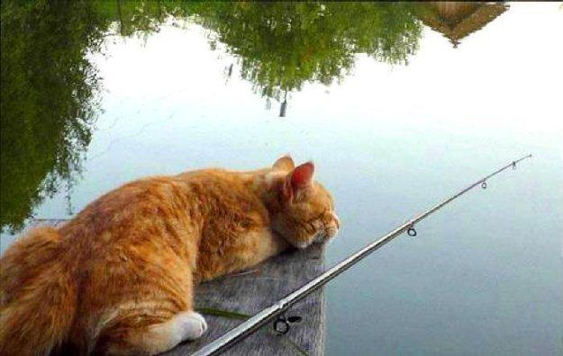 не все лови что плывет не все уди что клюет