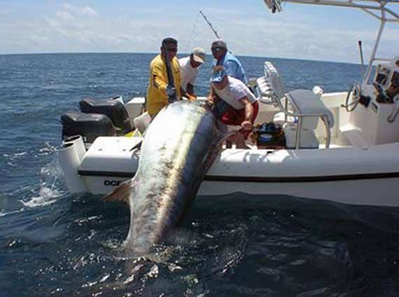 катер для ловли тунца купить