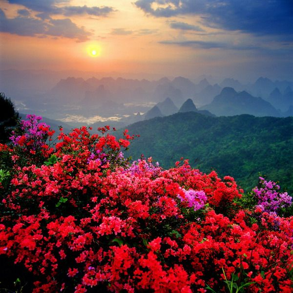 Природа теги картинки природа фото