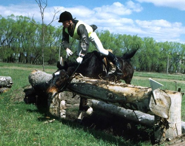 лошади прикол фото