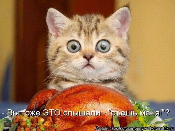 Картинки по запросу смешные картинки про котика