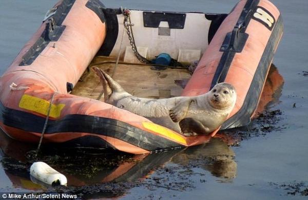 мужик как тюлень на рыбалке