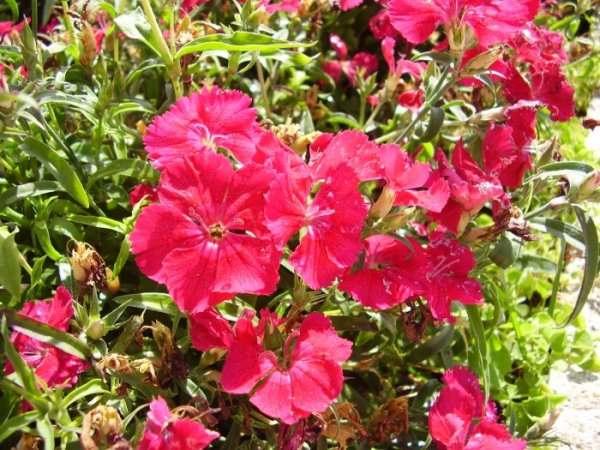 Фото цветы турция 120