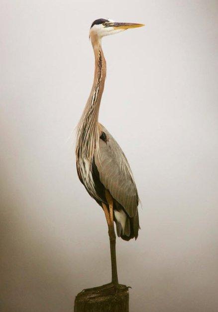 Лучшие фотографии конкурса «Птицы в фокусе». - Природа - Приколы ...