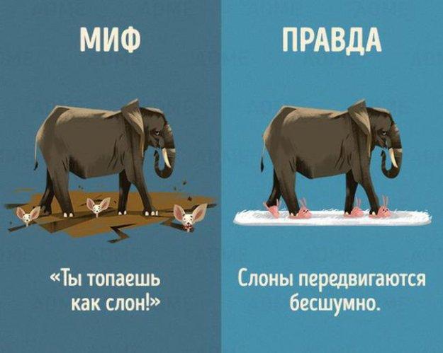 Мифы и правда о животных