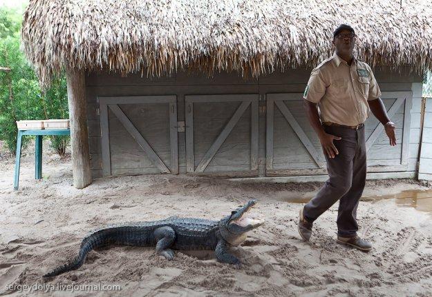 ловля больших крокодилов