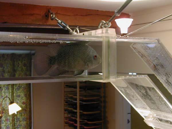Вот такой аквариум соорудили для