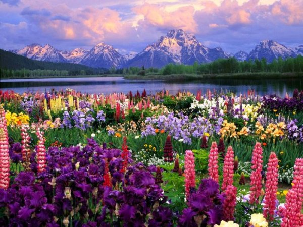 картинки прекрасные цветы