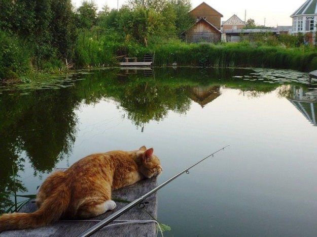 текст о том как ребята пошли на рыбалку