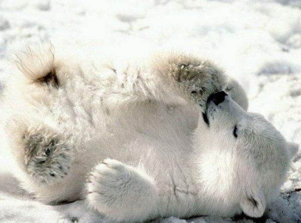 прикольные картинки с медвежатами: