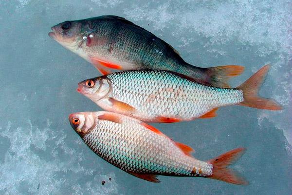 подледная рыбалка в марте на плотву