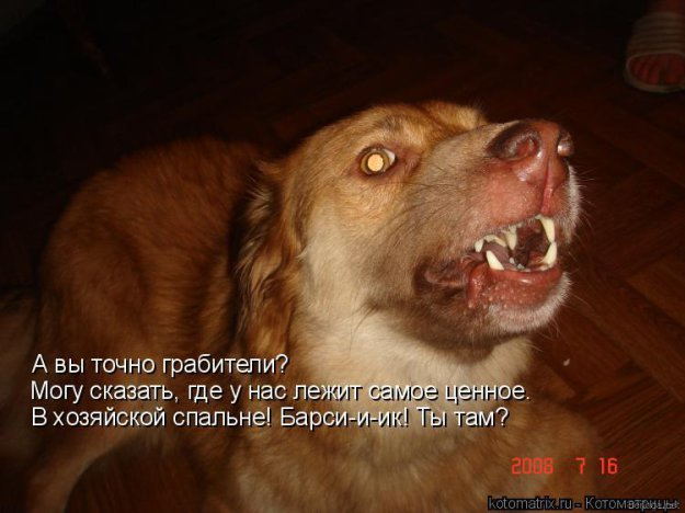 http://bm.img.com.ua/nxs/img/prikol/images/large/9/9/148599.jpg